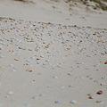 Photos: ヒロベソカタマイマイの化石