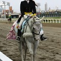 写真: 川崎競馬の誘導馬05月開催 誕生日記念レースVer-18-large