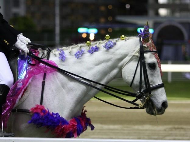 写真: 川崎競馬の誘導馬05月開催 藤Ver-120514-12-large