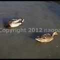 Photos: P3030698