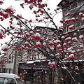 Photos: 冬のななかまど