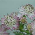 Photos: 生花で幸せを