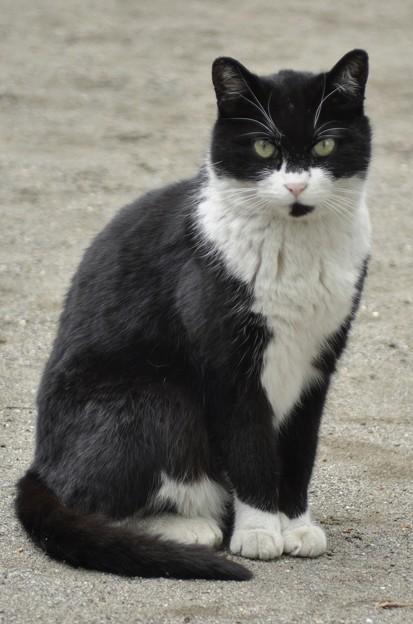 写真: 猫と遊ぶ(1)