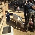 東山動植物園_127:ヤギ