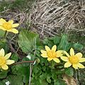 Photos: flower03302012dp2-02