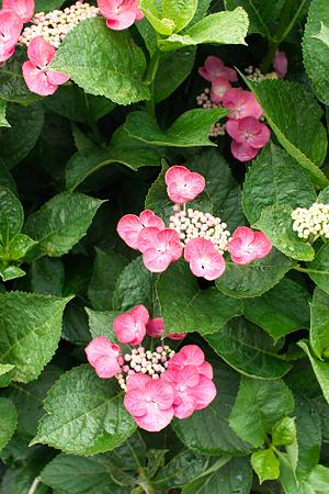 flower06252011sd15-03