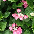 Photos: flower06252011sd15-03