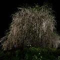 写真: 相野の花