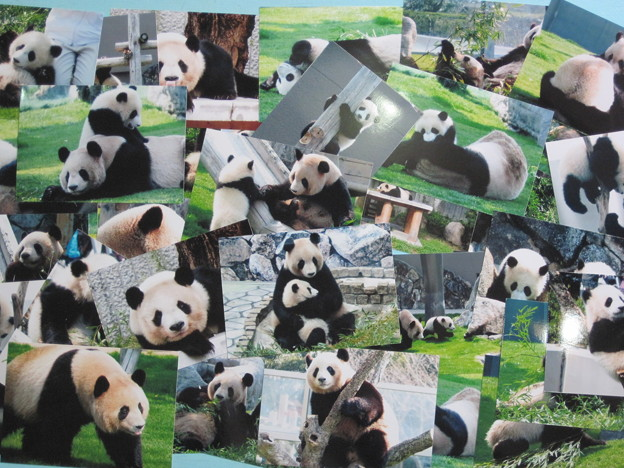 写真: パンダ写真プリントIMG_0001