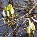 Photos: 冬と春の境目