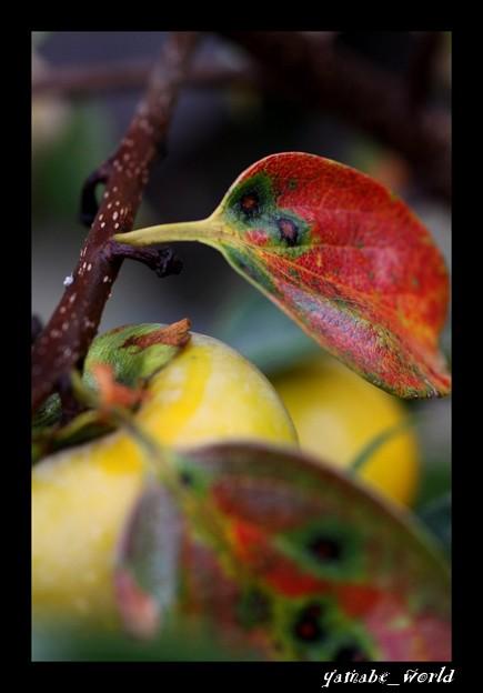 Photos: 秋に染まりて…