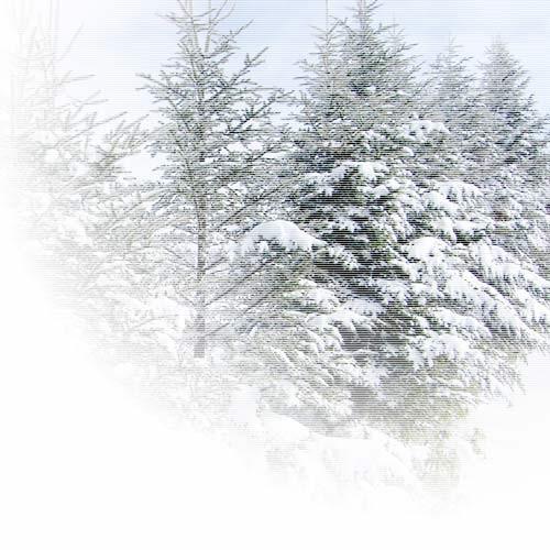 もみの木-右上固定線