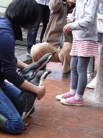 20120331 掛川 ペンギンランチ05