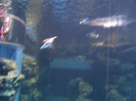 20110815 海響館 亜南極水槽14