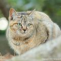 Photos: yamanao999_cats_082