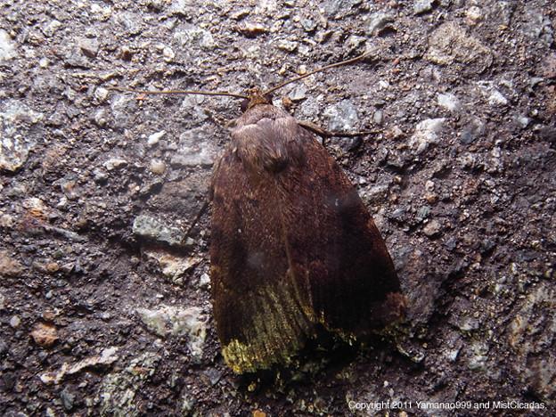 写真: yamanao999_insect2011_303