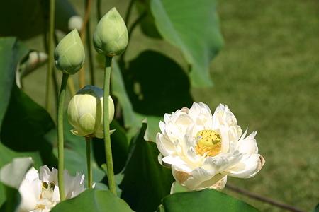 花とつぼみ…
