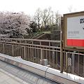 Photos: 2012桜@丸ノ内線・四ツ谷駅ホーム(3)