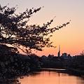 Photos: 夕焼け×桜×福岡タワー
