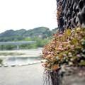 写真: 201205-05-001PZ