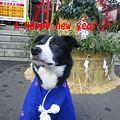 写真: ahappy new year2012
