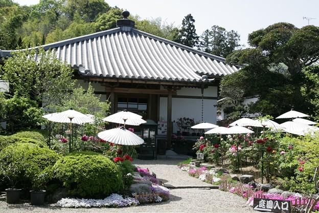 IMG_5471當麻寺・西南院・石楠花と本堂