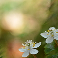 Photos: 春の訪れ・・・。