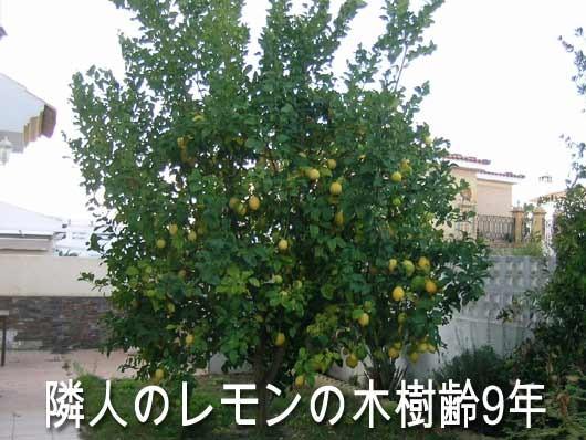 2315_lemon
