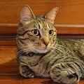 Photos: 振り返った先にはもう一匹の猫が