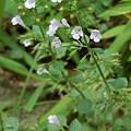 野の花001