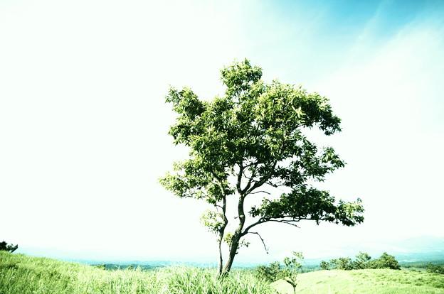 ある夏の午後