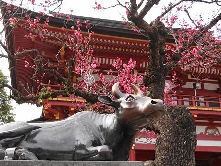 大宰府天満宮:神牛と紅梅