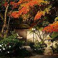 Photos: 神社の境内