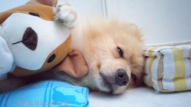 ポチ、眠たい…