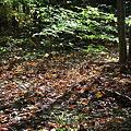 Autumn Footsteps