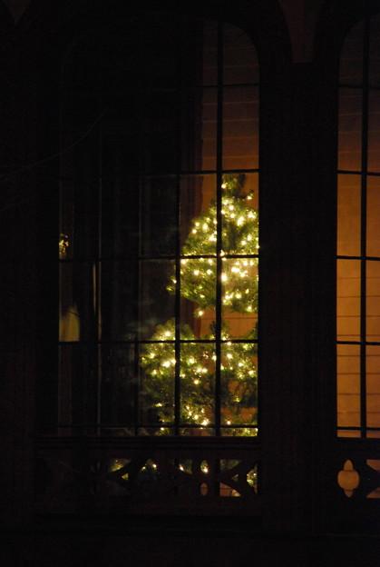 写真: The Museum's Tree