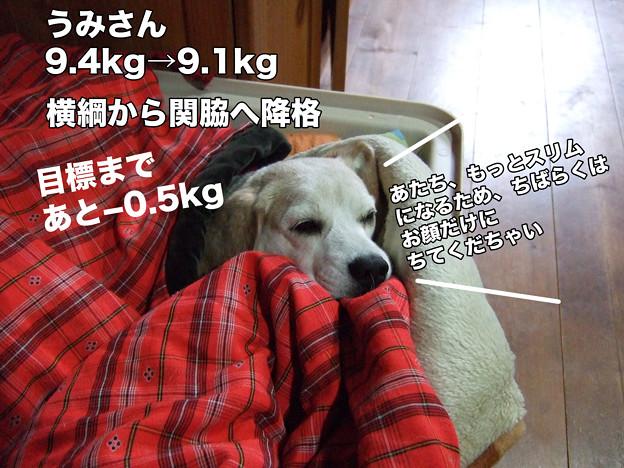 うみさんの体重