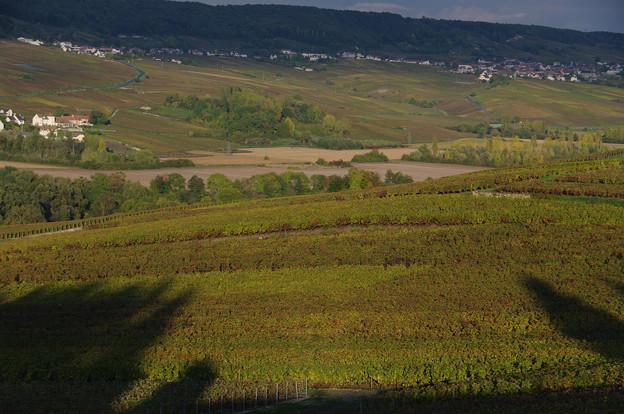 秋のブドウ畑