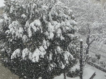 120229-雪 (3)