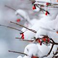 Photos: 雪 EOS7D SPAF90 272E