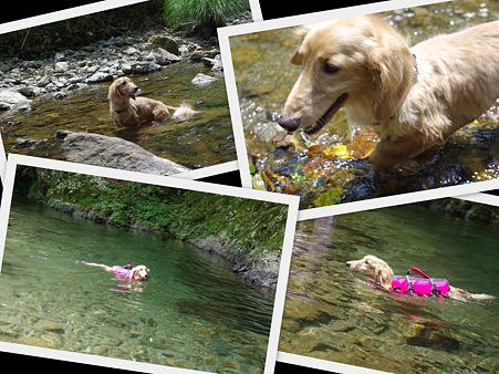 クー太の川遊び