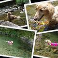 写真: クー太の川遊び