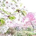 Photos: 公園2