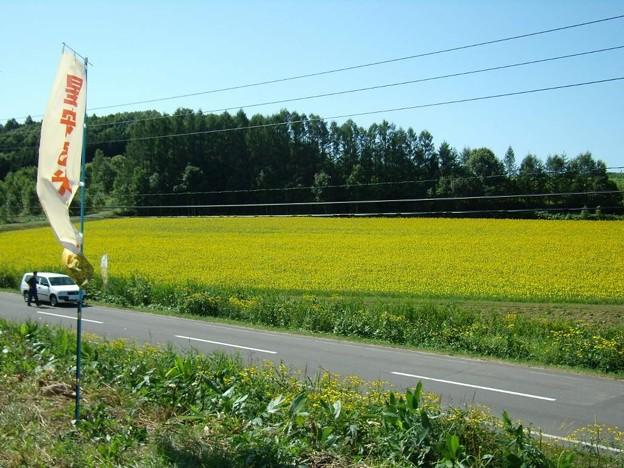写真: 8_13智恵文ひまわり畑02