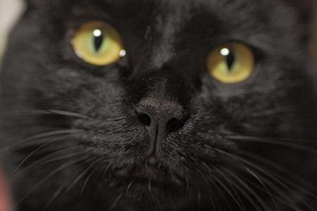 鼻にピント~黒猫編