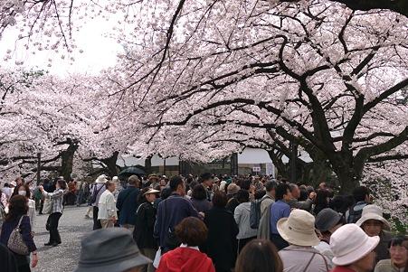 2012.04.10 九段 千鳥ケ淵 田安門前