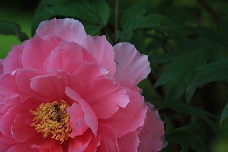 2012.05.04 和泉川 ボタン