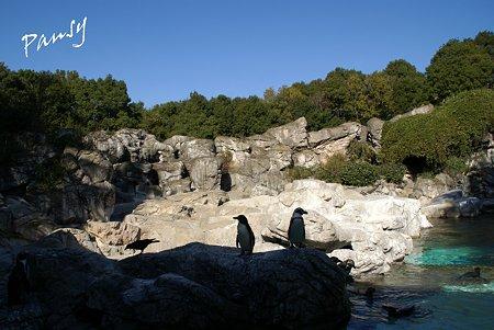フンボルトペンギン・・ズーラシア