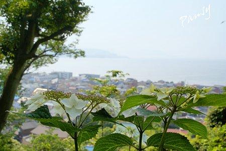 海を望む丘より・・水無月の長谷寺・・11