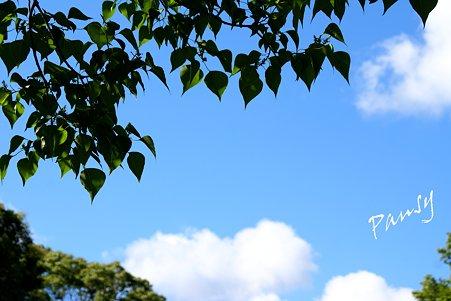 葉っぱと・・空と・・1